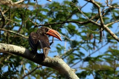 Bird Chatter - September 2019